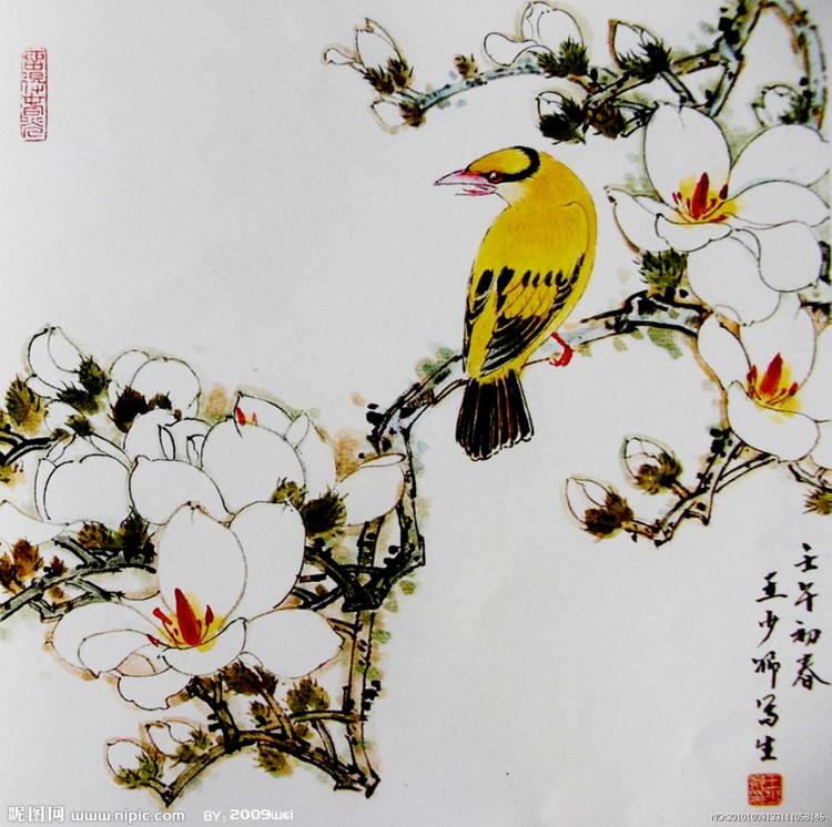玉兰花是一种名贵之花,开花季节为春季,花开时无叶,花瓣呈白色,芳香宜人,被誉为白玉无瑕。   玉兰花画法步骤   一、先用淡墨勾花瓣,用狼毫或兼毫的中锋经营位置。花头勾完后,再用淡草绿复勾,用白颜色罩染。待干后点蕊,花蕊颜色为胭脂加墨,干后用淡黄罩染花蕊。   二、枝干与花苞   枝干画法先着赭石颜色,用狼毫笔或兼毫笔画,行笔时用中锋、侧锋、逆锋自然画出,趁湿用干笔重墨散锋以墨破色,使枝干出现墨色交融的肌理效果,枝头的花苞用赭石加墨画,有虚有实。   三、玉兰花和枝干画完后,用淡草绿点染白玉兰花的