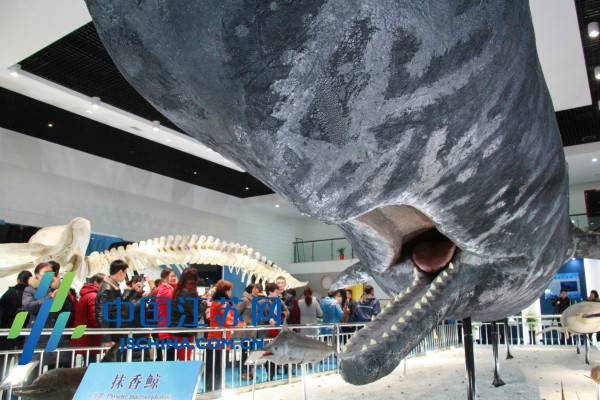 如东县首个海洋生物主题博物馆开馆-图片版权归原作者所有