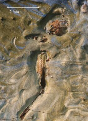 美国纳尔逊-阿特金斯美术馆在梵高杰作中发现蚱蜢