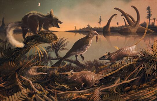 英国大学生发现 1.45 亿年前鼠类牙齿遗骨