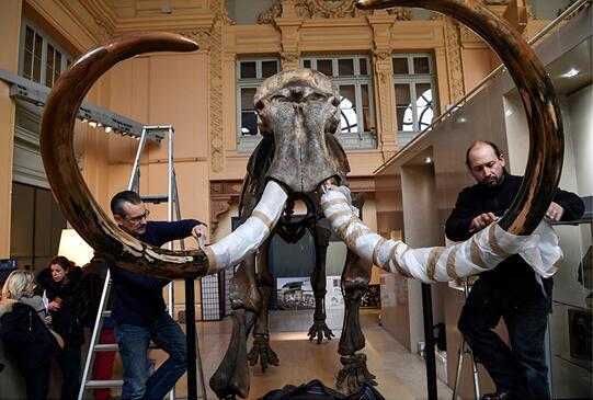 巨型珍贵猛犸象遗骸化石竞得近 55 万欧元