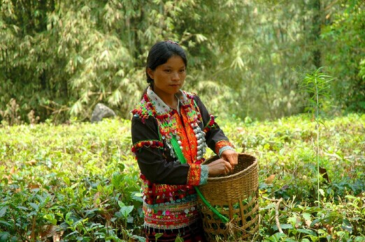 德昂族礼仪文化——择算茶