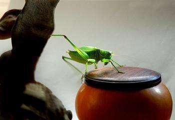 旧时京城的闲趣享受:养蝈蝈儿和玩蟋蟀