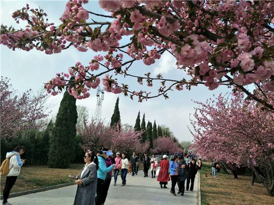 [新乡]潞王陵牡丹花开,游人如织