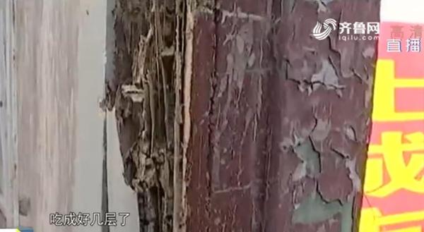 """烟台200年历史的重点保护文物遭白蚁""""啃空"""""""