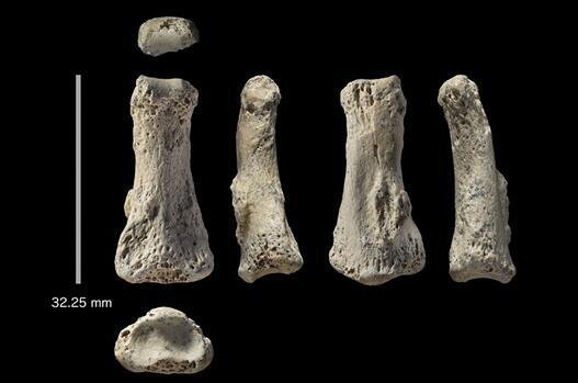 新指骨化石表明智人在 8.5 万年前已经深入阿拉伯半岛