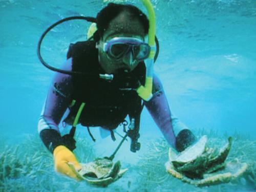 """中国水下考古将首次突破深海""""空白区"""""""