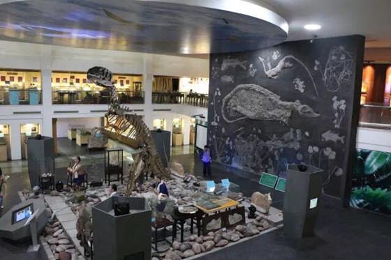 上海收藏家向日喀则学校捐赠地质藏品