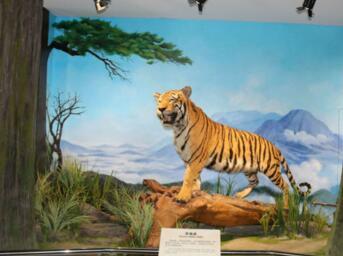 江西九江森林博物馆于5月9日正式开馆