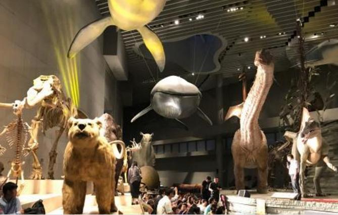 """上海自然博物馆开启""""恐龙季""""发烧友夜游博物馆"""