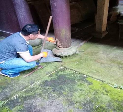 今年鄞州区全域文物建筑白蚁防治顺利结束
