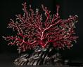 红珊瑚价格呈爆炸式增长,受诸多因素的影响。