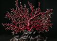 红珊瑚如何收藏?什么样的红珊瑚具有收藏投资价值?
