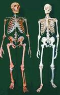 从古DNA发现的人类祖先史