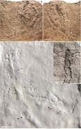 中国找到迄今最古老的足迹化石