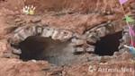 乐清发现800年前南宋古墓,出土多种文物