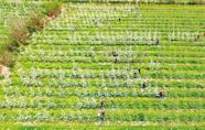 """""""一带一路""""农业协作蓝图正在展开"""