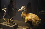 大英自然史博物馆宝藏首登台湾