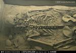 美国考古学家发现一具遗骸 疑为美国议会始祖