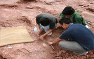 缙云县壶镇工业园区发现恐龙化石