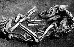 小哺乳动物考古深化三峡生态研究