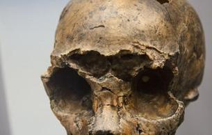 我国首次发现海德堡人类型化石