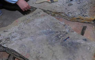 湖北发现2.47亿年前湖北鳄类和鱼龙类化石