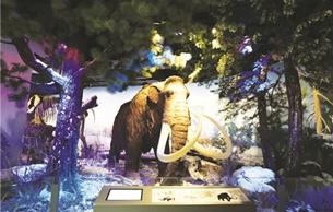 内蒙古自然博物馆即将对外开放