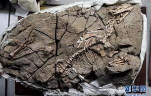 恐龙牙釉质波纹构造的最早记录被发现