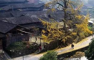 温州9处村庄入选第五批中国传统村落名录