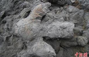 英国发现大量保存完好恐龙脚印化石 细节清晰可见