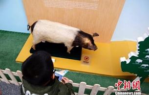 猪年生肖特展亮相上海科技馆