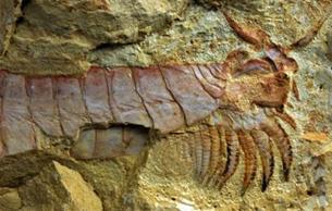 科学家揭开寒武纪泛甲壳类起源之谜