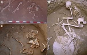 青铜时代的西班牙墓葬发现被驯化的狐狸